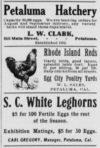 Petaluma c.1910