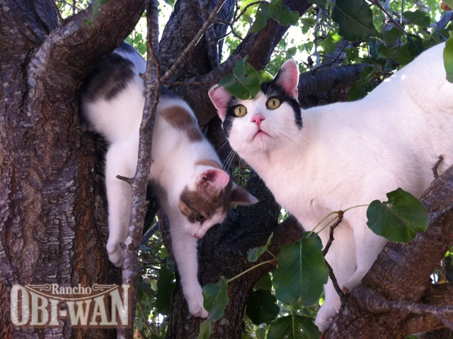 Rancho Obi-Wan Kitties: April Mae & Willy